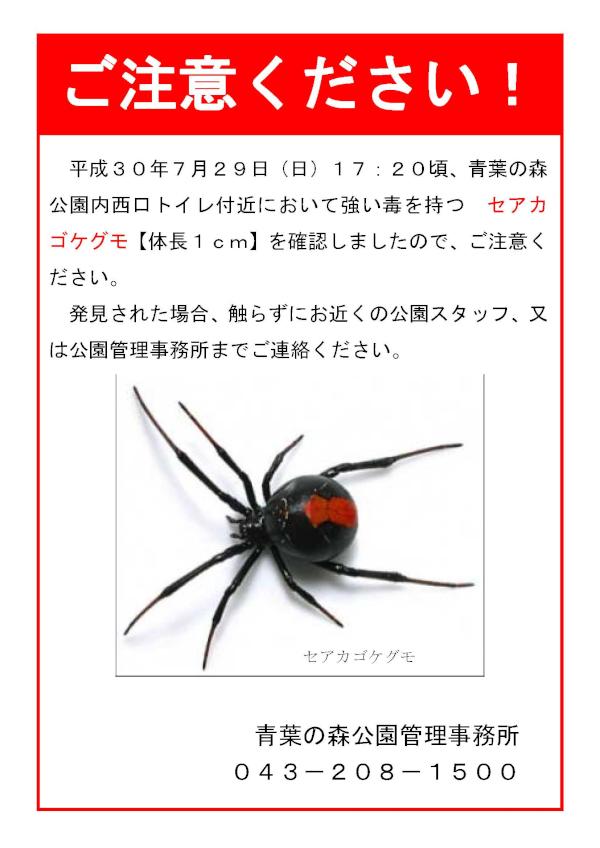 青葉の森公園におけるセアカゴケグモの発見について